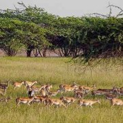 Gujarat Wildlife Tour Package