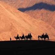 safaris in ladakh
