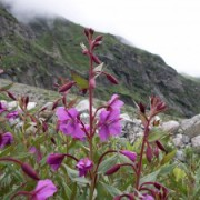 valley-of-flowers-hemkund-sahib