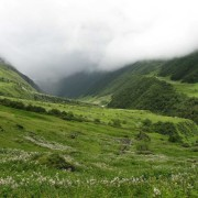 valley of flowers1