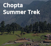 Chopta Summer Trek